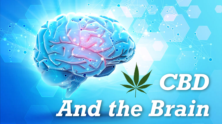 CBD and the Brain